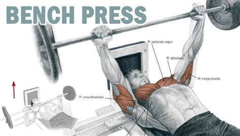 supine bench press supine bench press 28 images matrix fitness supine