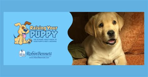 tips for raising a puppy 10 tips for raising a puppy get the ultimate guide to raising your puppy