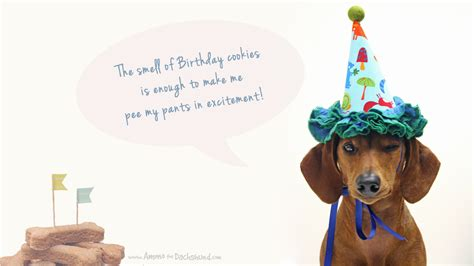 Dachshund Birthday Meme - dachshund birthday meme 28 images happy birthday
