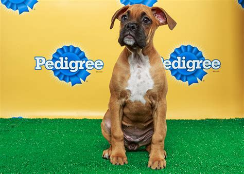 what time is the puppy bowl on today when is the puppy bowl start time info right here nfl news rumors and opinions