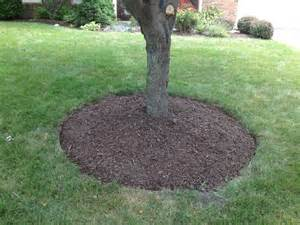 Metal Landscaping Edging by 10 Best Images About Yard Idea On Pinterest Trees Tree