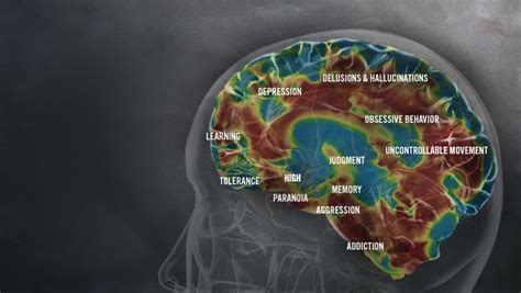 Can Detox Cause Brain Damage by Methhetamine And How It Harms The Human Thinglink