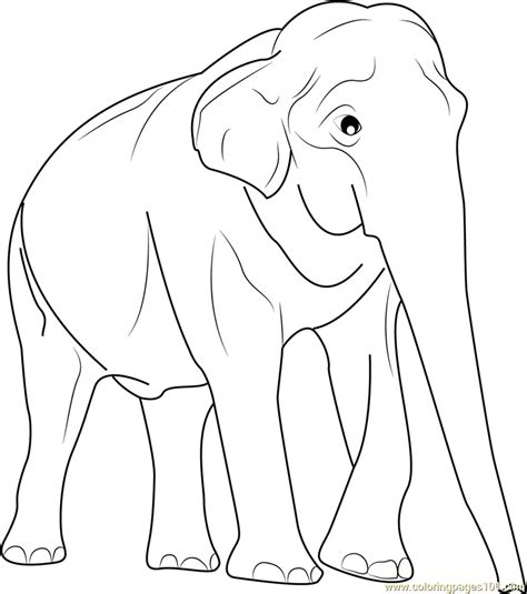 thai elephant coloring page thailand elephants free colouring pages
