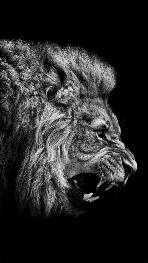 wallpaper iphone 7 lion angry lion the iphone wallpapers