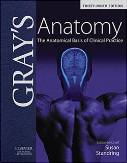 gray s anatomy a fact filled coloring book pdf essential anatomy and physiology books for electronics