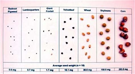 seed sizes integrated pest management