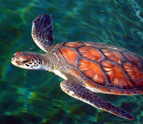 colors of the turtles colorful turtles www pixshark images galleries