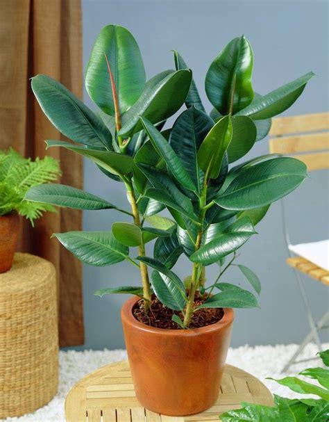 Penetralisir Udara 8 tanaman hias ini bisa membuat rumahmu jadi minim polusi