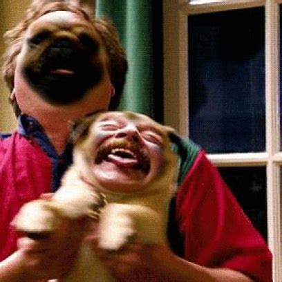 human pug pug human can t contain their expressions switch faces