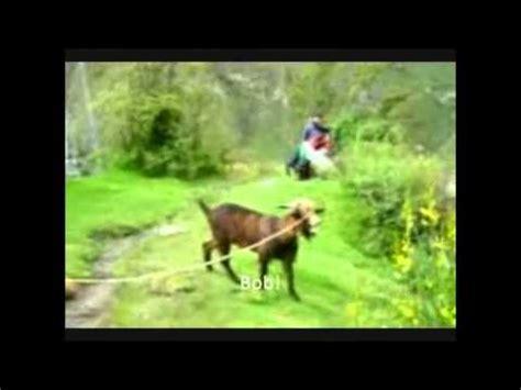 adele ft goat daft punk get lucky goat edition doovi