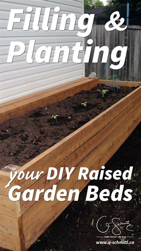 filling  planting diy raised gardens building