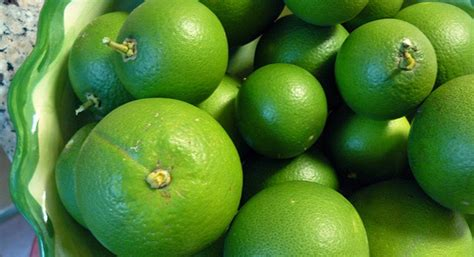 Perasan Jeruk Besi jeruk nipis manfaat jeruk nipis untuk rambut tubuh wajah