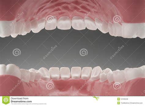 interno bocca denti interni della bocca immagine stock immagine di