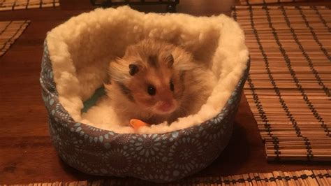 hamster bed a hamster in a tiny bed is the pick me up you need nerdist