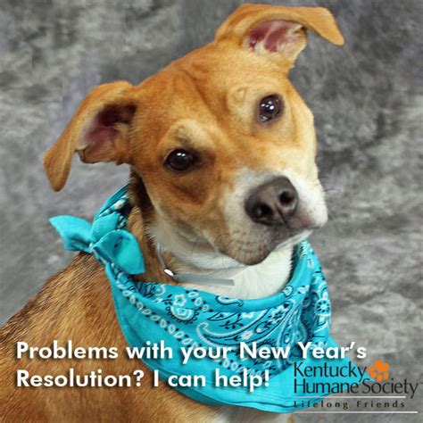 ky humane society adoptable dogs new year new you