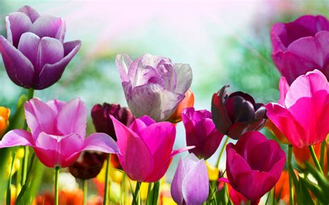 photos of spring flowers tired of winter get ready for spring with these 48 hd