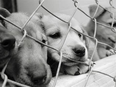 animal shelter puppies should your next be a shelter