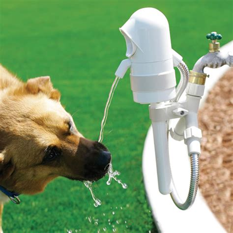 dogs watering activated outdoor take my paycheck shut up and take my money the