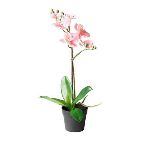 fejka artificial potted plant orchid pink 9 cm ikea