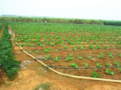 irrigare il giardino l irrigazione a goccia idraulico fai da te irrigare