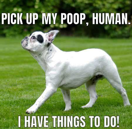 Dog Poop Meme - what happens when we put ourselves into the mind of dogs dog memes barking laughs