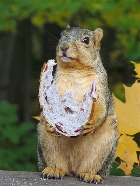 60 beautiful pictures of squirrels