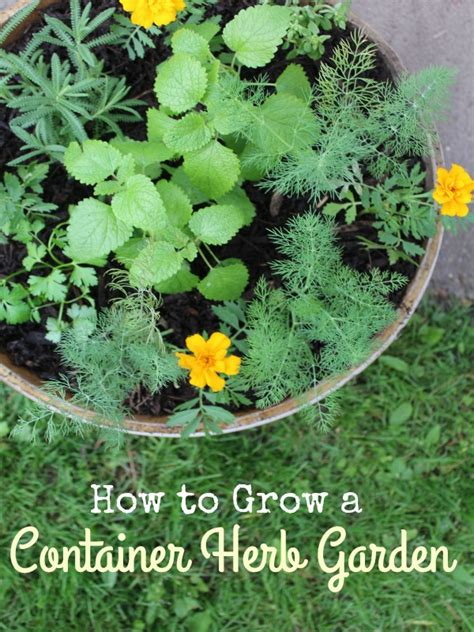 how to grow a herb garden diy container herb garden