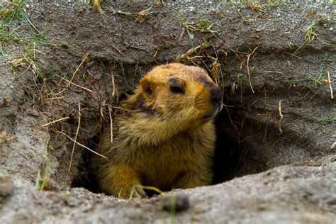 groundhog day tour where to take a groundhog day inspired trip en route