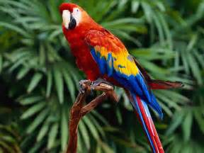 macaw colors herbweb parrots photo of a parrot