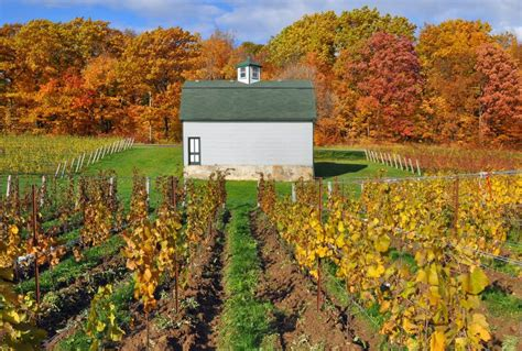 beamsville bench wineries beamsville bench wineries 28 images cave spring csv