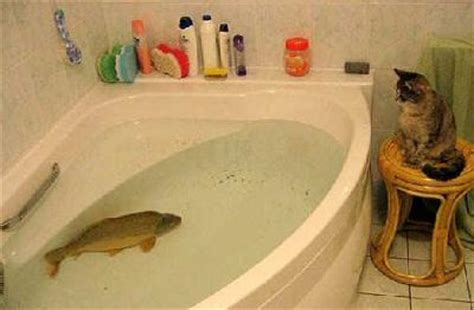 a fish in the bathtub mighty cat strikes back