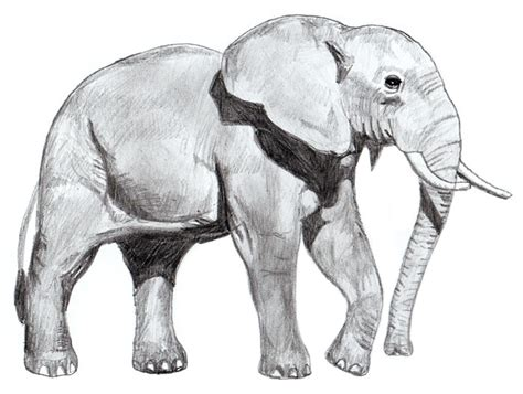Drawing Elephant by How To Draw An Elephant Yedraw