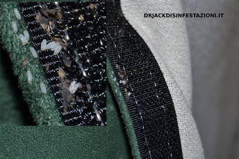 cimici da materasso cimici materasso 28 images cimici da letto come