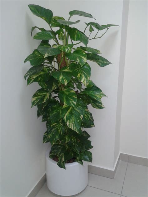 landscaping company dubai indoor plants uae outdoor