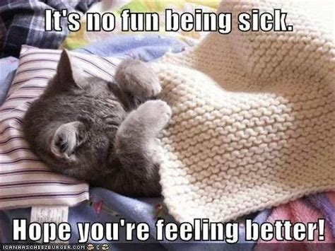 feel better you feel better soon quotes cats quotesgram