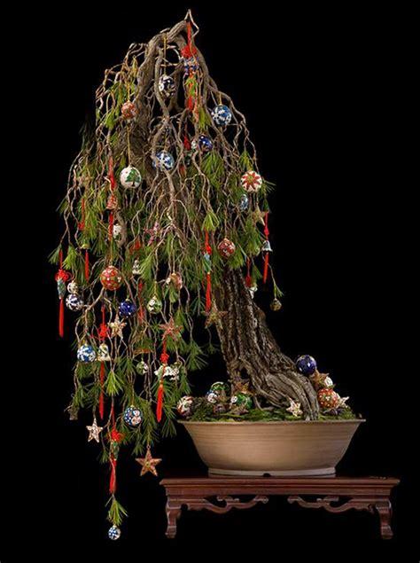 ponzi christmas trees marin heads up deck the bonsai bonsai bark
