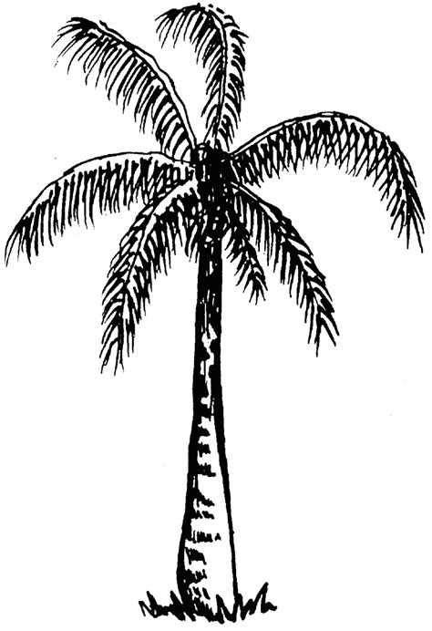 tree clipart black and white tree clipart black and white clipartion