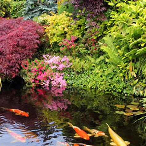 Lowes Water Garden by How To Build A Pond Or Water Garden In Your Yard