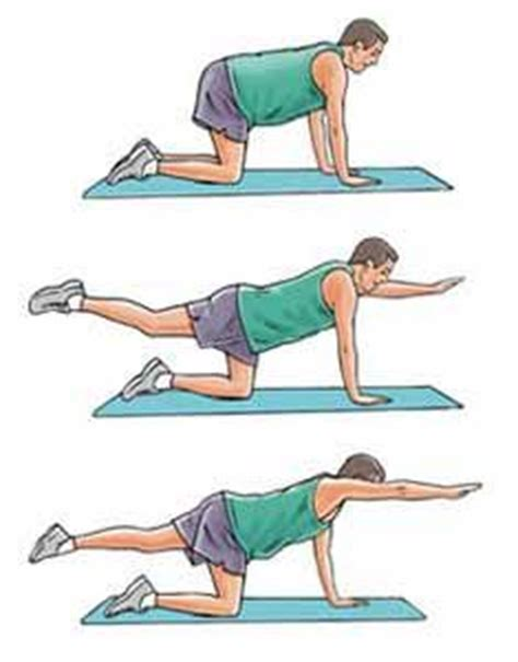 1000 images about best exercises for lower back on