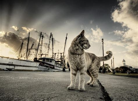 gambar wallpaper cantik lucu 10 gambar kucing paling cantik dan imut