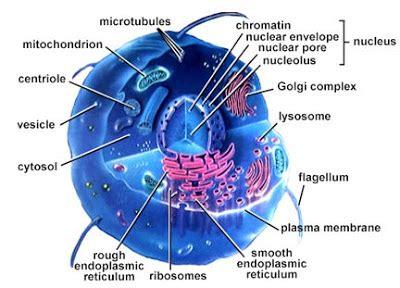 Biologi Jilid Ii Neil A Cbell biologi is beautiful