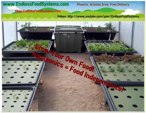 backyard aquaponics kit 306 best aquponics aquaculture images on pinterest