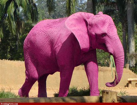 the pink elephant in the room pink elephant by troye evers tourette tics and tats