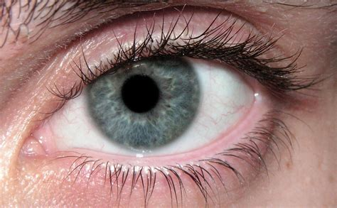 determining eye color the stochastic scientist determining appearance from