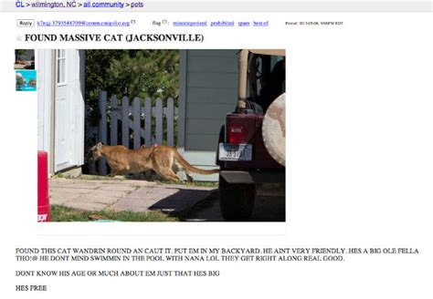 found craigslist found cat from craigslist weknowmemes