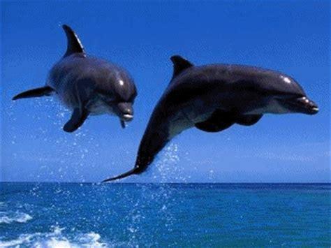 gif wallpaper tweak dolphins screensaver main window net executive