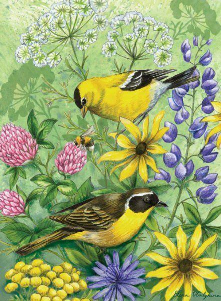 pin  bird inspiration