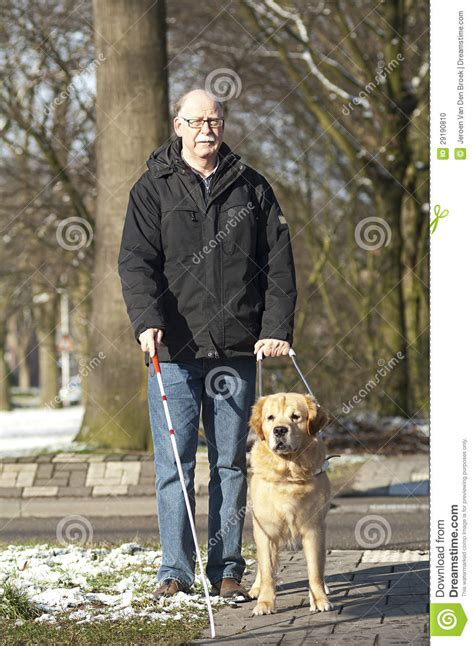 how to a guide for the blind guide is helping a blind stock photo image of friendship assistance 29190810