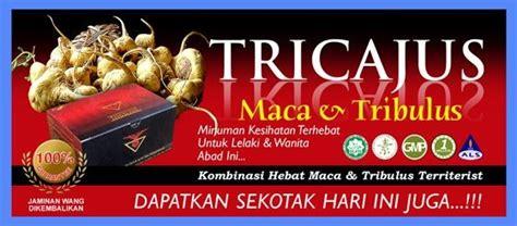 Obat Herbal Tricajus obat gejala sifilis kardiovaskuler obat herbal kista