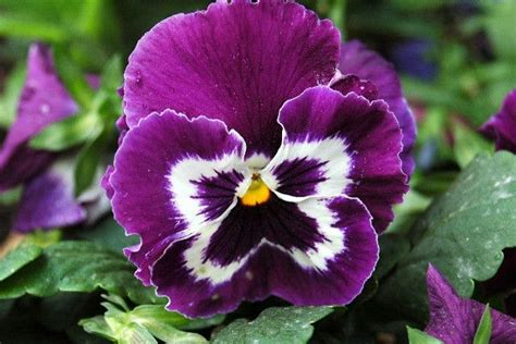 fiori autunnali e invernali piante autunnali e invernali per terrazzi e interni le
